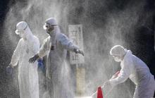 Cúm gia cầm độc lực cao lây lan sang tỉnh thứ 10 của Nhật Bản