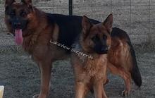 Mỹ: Ra vườn chơi với đàn chó, thiếu niên 14 tuổi tử vong bất ngờ