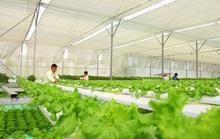 Đưa nông sản ĐBSCL vào chuỗi giá trị toàn cầu