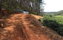 Loạn cò đất vùng quê