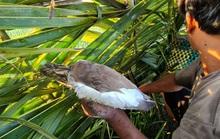 Phải chấm dứt tận diệt chim trời! (*): Giải pháp cấp bách bảo vệ động vật