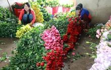 Lần đầu tiên hoa hồng Đà Lạt rớt giá mạnh trước lễ Tình nhân