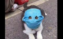 Virus corona mới: Cả mèo cũng đeo khẩu trang ở Trung Quốc