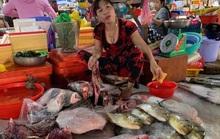 Lập biên bản xử lý tiểu thương vô tư xẻ thịt rùa xanh bán ở chợ Hà Tiên