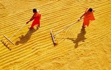 Cuộc thi ảnh Nét đẹp lao động: Hành trình cây lúa Miền Tây