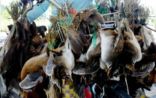 Phải dẹp nạn buôn bán động vật hoang dã