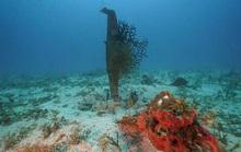 Phát hiện 3 máy bay Mỹ bị bắn hạ trong Thế chiến thứ hai dưới đáy biển