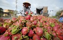 Mở thêm thị trường cho nông sản