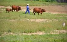 Bất động sản nông nghiệp gần như... bất động