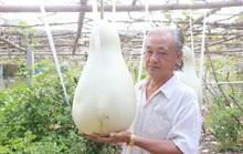 Lạ lùng những trái bầu siêu to, khổng lồ nặng từ 15-30 kg