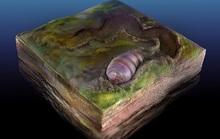 Sốc với tổ tiên 555 triệu tuổi của loài người bị niêm phong trong đá