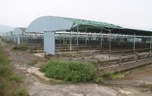 Bầu Đức Hoàng Anh Gia Lai có liên quan gì đến dự án nuôi bò thua lỗ ngàn tỉ của Trần Bắc Hà?