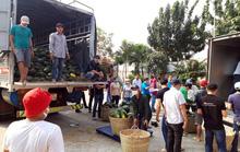 Hỗ trợ tiêu thụ 8,7 tấn dưa hấu cho nông dân tỉnh Đắk Lắk