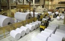 Ngành giấy trước thách thức mở rộng khi nhu cầu giấy bao bì tăng cao