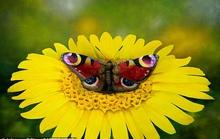 Biến người mẫu khỏa thân thành... bươm bướm