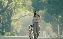 Phim Việt dốc sức cho ngày trở lại