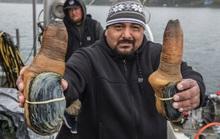 Công nghiệp đánh bắt ốc vòi voi đắt đỏ ở Thái Bình Dương