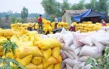 Xuất khẩu gạo: Phải ưu tiên các đơn hàng đã có!