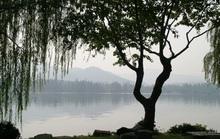 Tìm thấy chất chống nhiều loại ung thư trong cây cảnh hay gặp ở Việt Nam