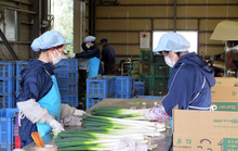 Nhật Bản bảo vệ quyền lợi lao động người nước ngoài trong dịch Covid-19