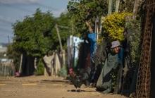 LHQ cảnh báo 3 triệu người châu Phi có thể chết vì Covid-19