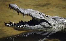 Nhanh trí kẹp ngón tay vào mũi cá sấu, người mẹ cứu sống con