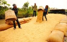 Khẩn trương giải tỏa gạo tại cảng