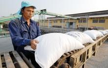 Địa phương bắt bẻ Bộ Công Thương vì sao lại áp hạn ngạch xuất khẩu gạo?
