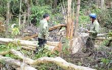 Nhận quản lý rừng, để mất 1.248 ha