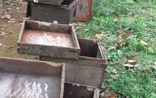 Ong nuôi chết la liệt, chủ nghi bị đầu độc bằng hóa chất
