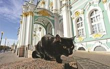 """Kỳ lạ bảo tàng thuê """"bảo vệ mèo"""" để trông giữ báu vật"""