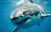 Chưa kịp lên thuyền, người đàn ông bị cá mập cắn chết