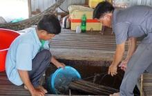 Chuyện con cá kêu éc éc ở Phú Tân - An Giang