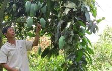 Phập phù cây ăn trái ngoại
