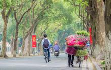 Hoa sen đầu mùa rục rịch lên phố