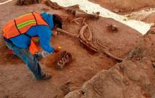 Xây sân bay, đào được 60 quái thú niêm phong dưới thành phố