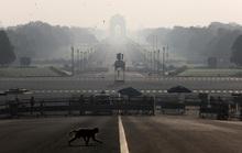 Ấn Độ: Bầy khỉ hung hãn đánh cắp mẫu máu Covid-19
