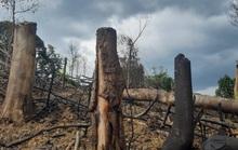 Khởi tố vụ phá rừng đầu nguồn thủy điện