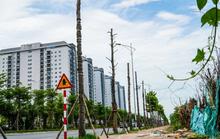 CLIP: Hàng loạt cây héo khô trên con đường ngàn tỉ vừa đi vào sử dụng