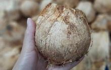 Ngày bán 5.000 quả dừa tí hon, hàng lạ gây sốt ngày nắng cháy