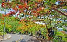 Giới trẻ Sài Gòn truyền tai nhau trải nghiệm con đường mùa hè đẹp nhất thành phố biển Vũng Tàu