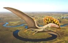 Phát hiện quái điểu chưa từng thấy mang dòng máu khủng long