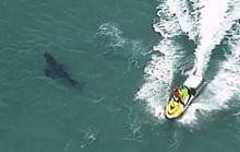 Lao ra đánh cá mập vẫn không cứu được người đàn ông 60 tuổi