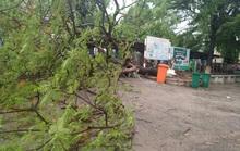 Cây phượng lớn lại bật gốc trong sân trường, 3 nữ sinh bị nhánh cây va vào