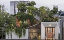 Ngôi nhà có công viên trên sân thượng