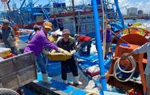 Đà Nẵng: Âu thuyền Thọ Quang còn ô nhiễm đến bao giờ?