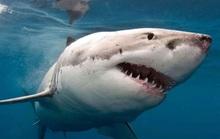 Con trai 10 tuổi bị cá mập lôi xuống biển, cha lập tức phóng theo