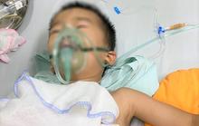 Bé 4 tuổi sờ đầu nghé, bị trâu mẹ húc thủng phổi