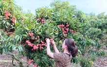 Trái cây Việt Nam rộng cửa sang Nhật