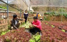 Giá rau củ quả Đà Lạt tăng mạnh